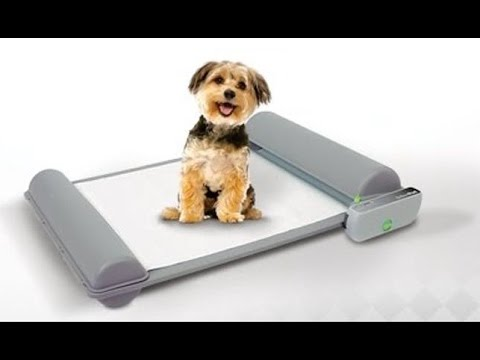 top 5 gadgets your pet must have 8